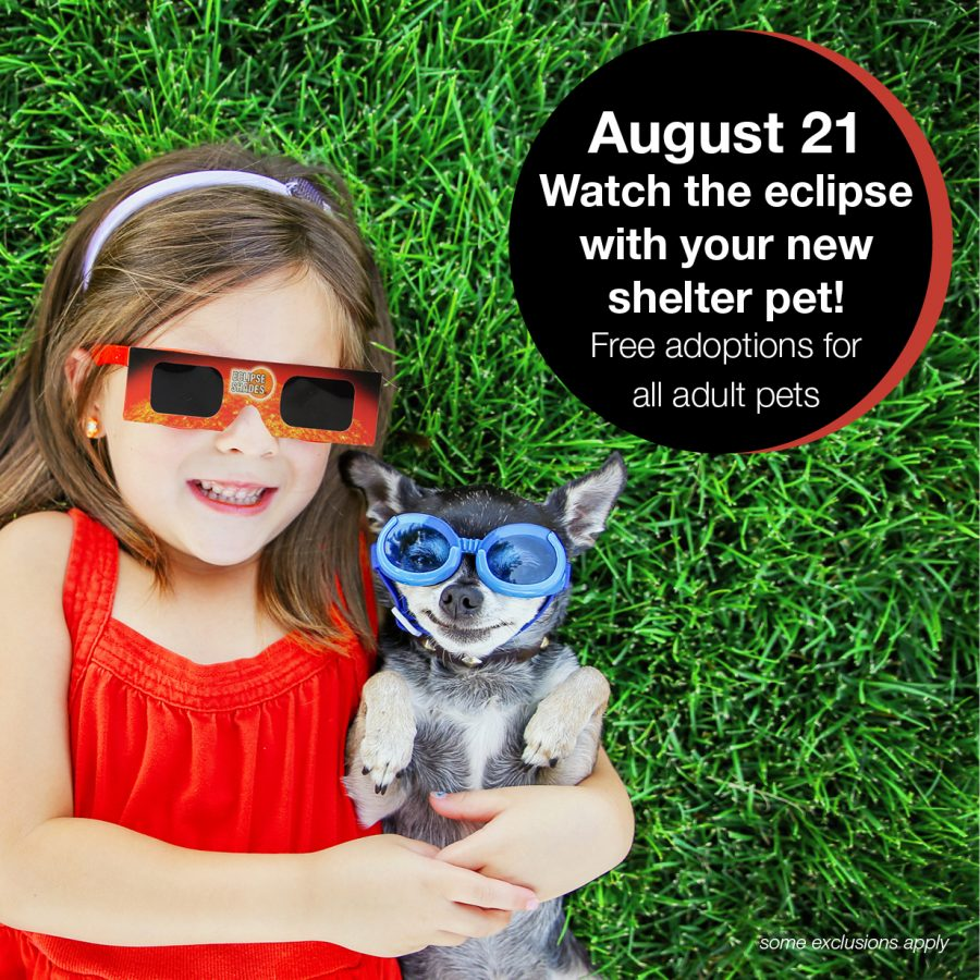 Perfect Alignment Pet Adoption Special – Celebrate Monday's Solar Eclipse by finding your new best friend